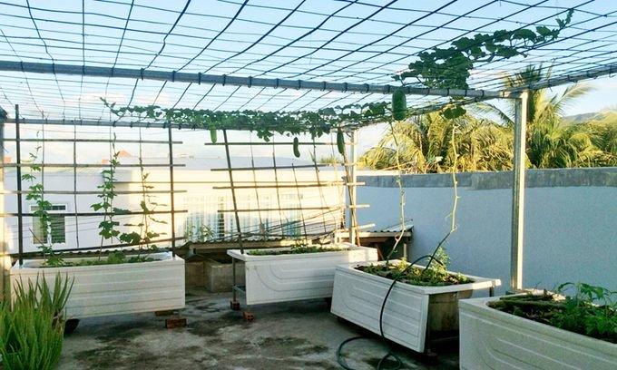 vuon rau san thuong 1 c958 Gia chủ sử dụng bồn tắm để trồng rau trên sân thượng